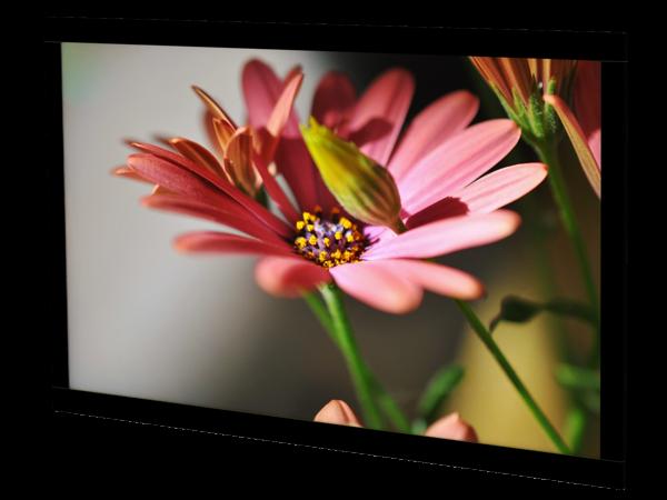 55″ HD Remote Electronics Bulkhead Display
